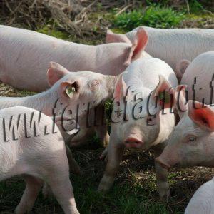 02.Porc